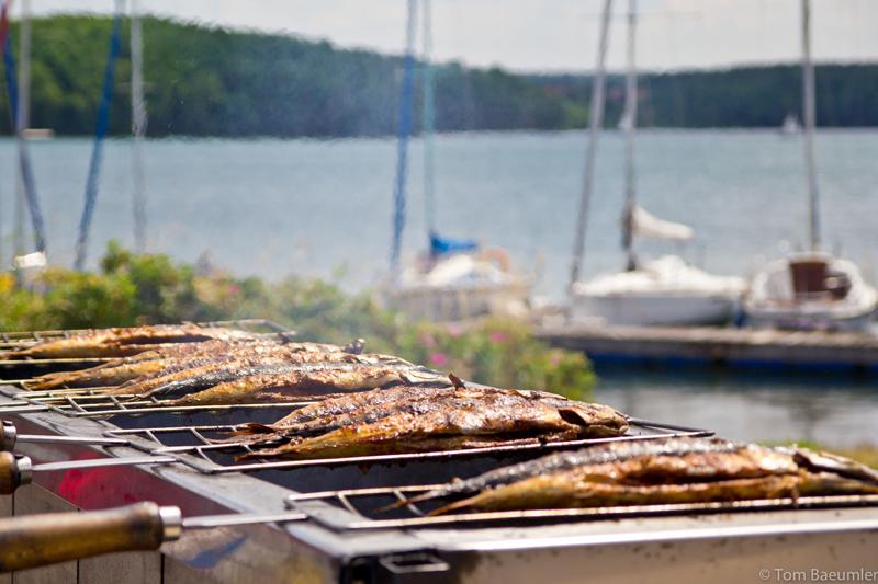 Fisch Michl Segelschule Steinberger See